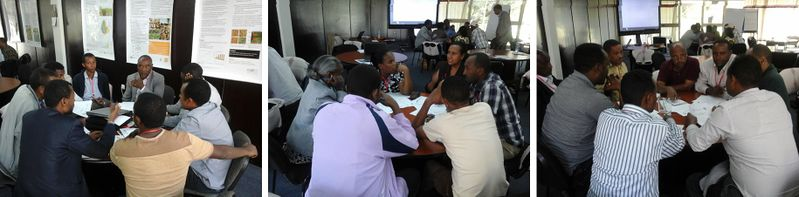 Group Discussions ILRI-N2A FRTW 16Oct2015.jpg